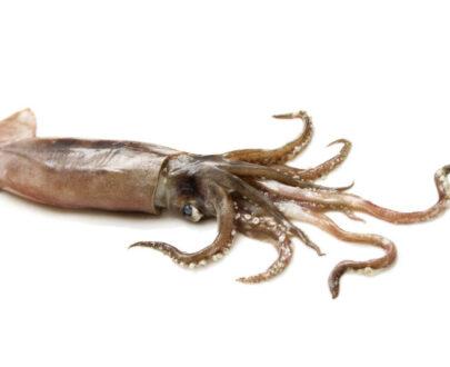 Calamari - Totani